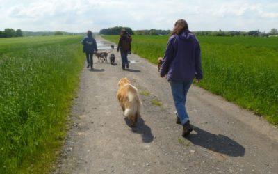 Promenades sociales